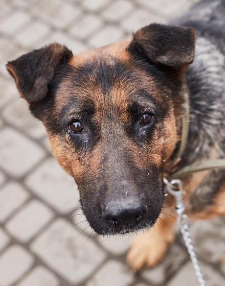 """У львівській ветеринарній клініці """"Лев"""" з'явились нові хвостаті улюбленці, які шукають друзів, господарів та дім, - ФОТО, фото-12"""