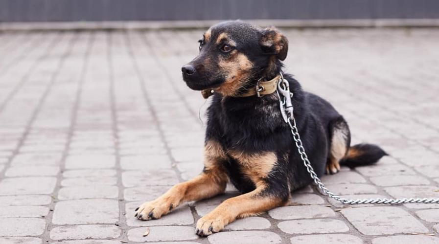 """У львівській ветеринарній клініці """"Лев"""" з'явились нові хвостаті улюбленці, які шукають друзів, господарів та дім, - ФОТО, фото-13"""