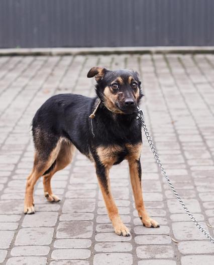 """У львівській ветеринарній клініці """"Лев"""" з'явились нові хвостаті улюбленці, які шукають друзів, господарів та дім, - ФОТО, фото-14"""