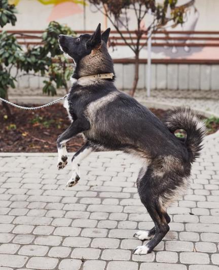 """У львівській ветеринарній клініці """"Лев"""" з'явились нові хвостаті улюбленці, які шукають друзів, господарів та дім, - ФОТО, фото-16"""