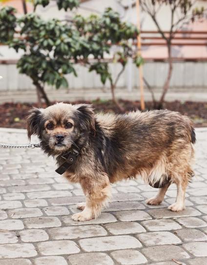 """У львівській ветеринарній клініці """"Лев"""" з'явились нові хвостаті улюбленці, які шукають друзів, господарів та дім, - ФОТО, фото-18"""