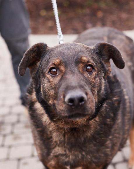 """У львівській ветеринарній клініці """"Лев"""" з'явились нові хвостаті улюбленці, які шукають друзів, господарів та дім, - ФОТО, фото-19"""