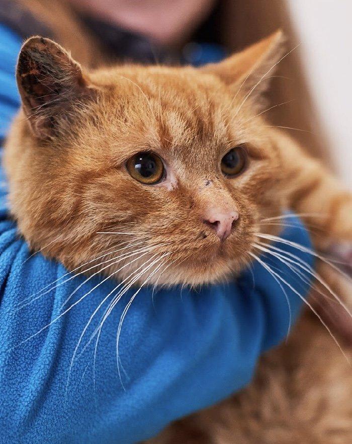 Кіт, фото: Ірина Шелест