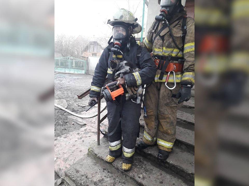 Рятувальники з котом в Жовкві