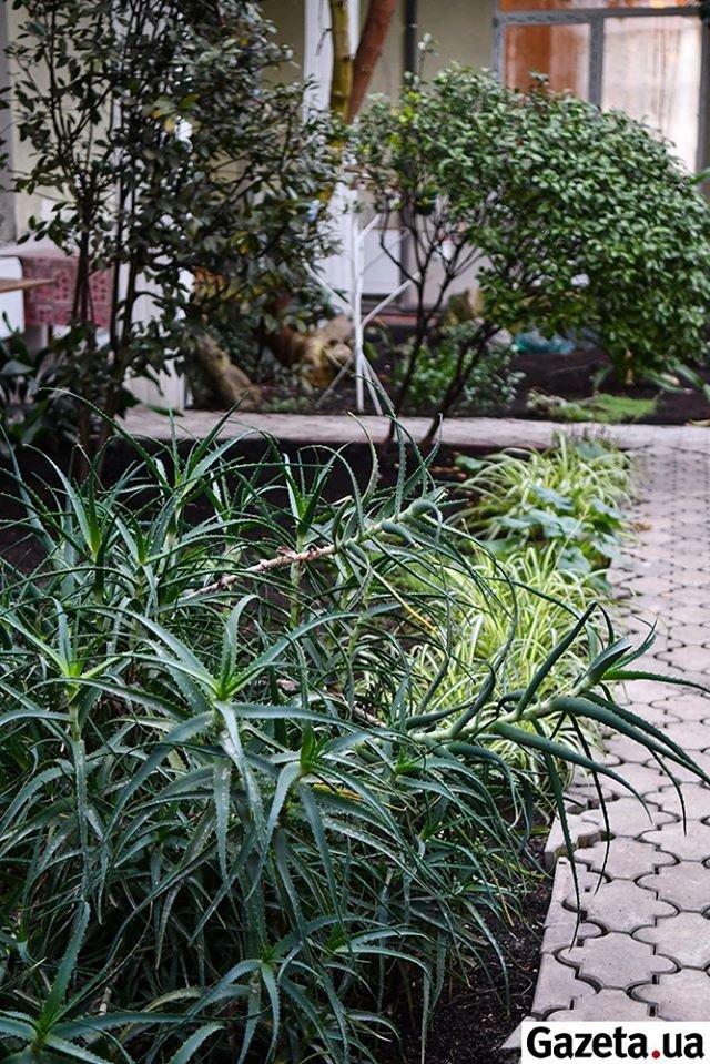 Ботанічний сад десантників 80-ої бригади, Валерій Шмаков, Gazeta.ua