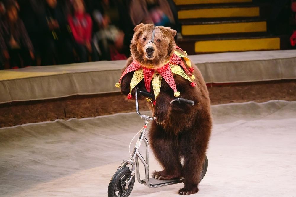 У Львові створили петицію з вимогою заборонити використання тварин у цирках, фото-2