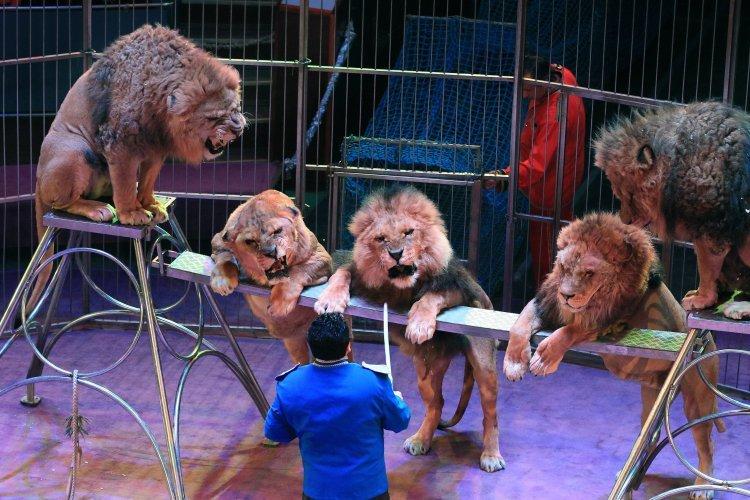 У Львові створили петицію з вимогою заборонити використання тварин у цирках, фото-1