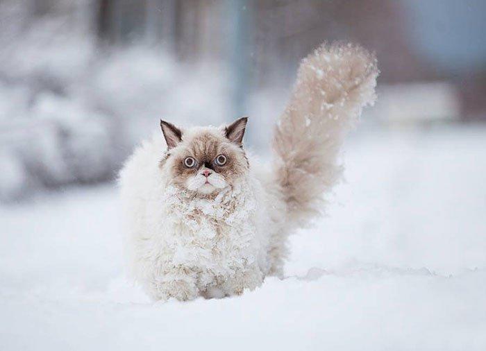 Кіт у снігу - https://imgur.com/