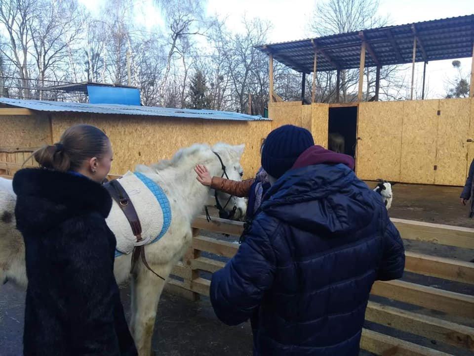 Фото: кінь з Домівки врятованих тварин, фейсбук