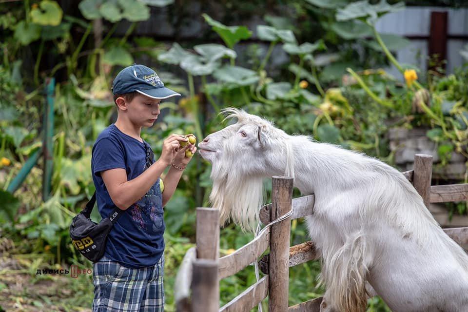 Фото: Домівка врятованих тварин / dyvys.info