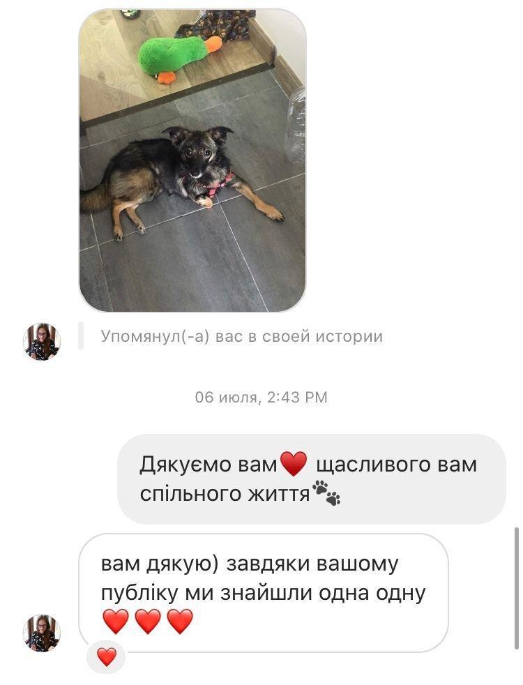 """Подяки від господарів тваринок """"Львівським лапам"""""""