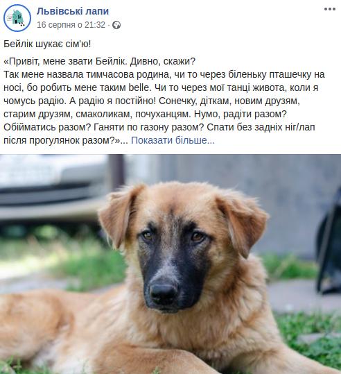 """Допис від імені собачки у """"Львівських лапах"""""""