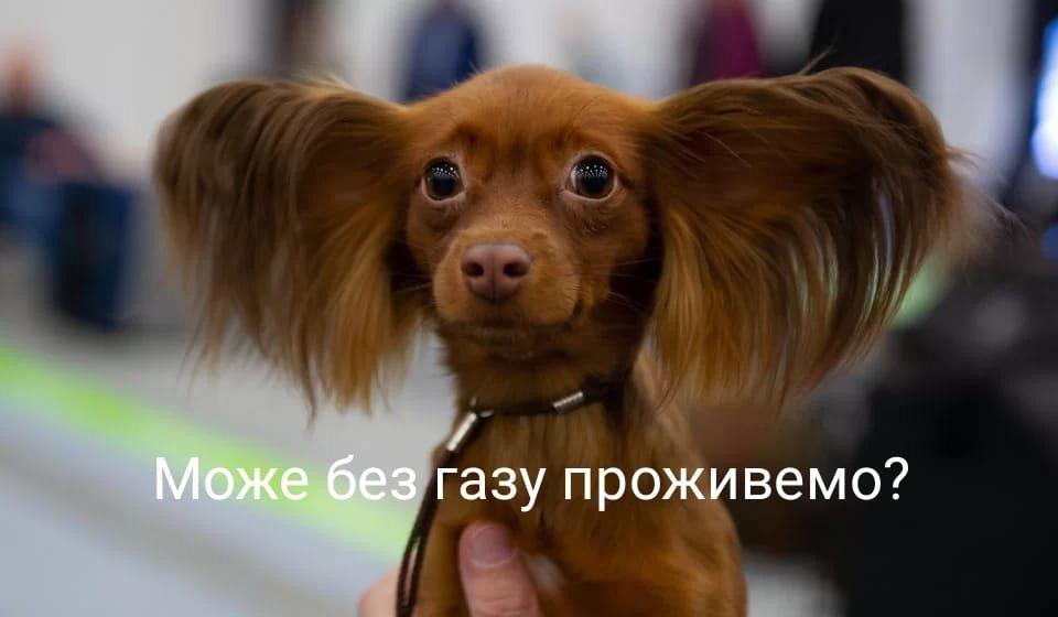 Продай собаку - сплати за газ, Фото з сомереж