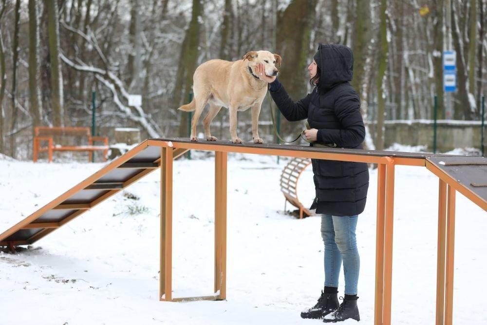 Вигульний майданчик для собак, Фото: ЛМР