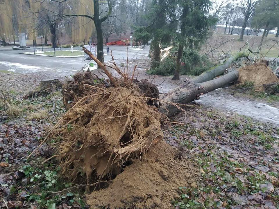 Сильний вітер повалив дерева, Фото: Facebook/Парк культури