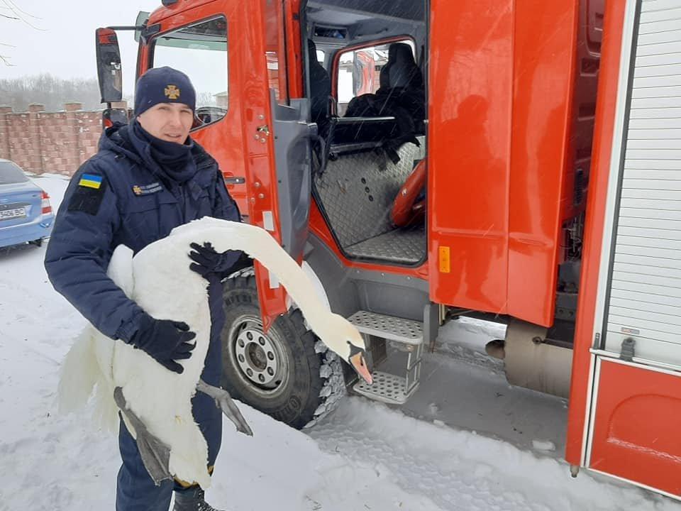 """16 лебедів врятували з """"крижаного полону"""""""