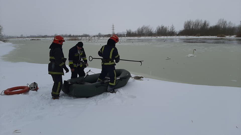 """16 лебедів врятували з """"крижаного полону"""", Фото: НЕО-радіо"""