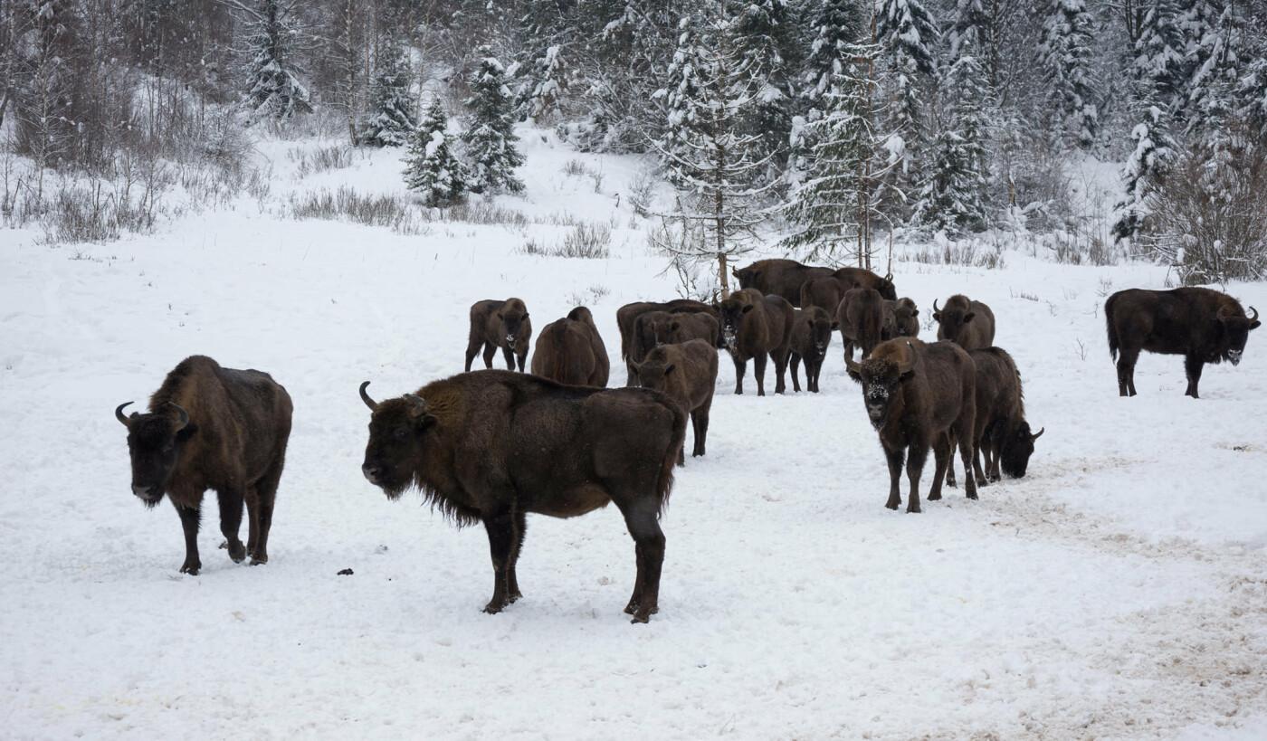 """Облік тваринного світу у Сколівських Бескидах, Фото: Facebook/НПП """"Сколівські Бескиди"""""""