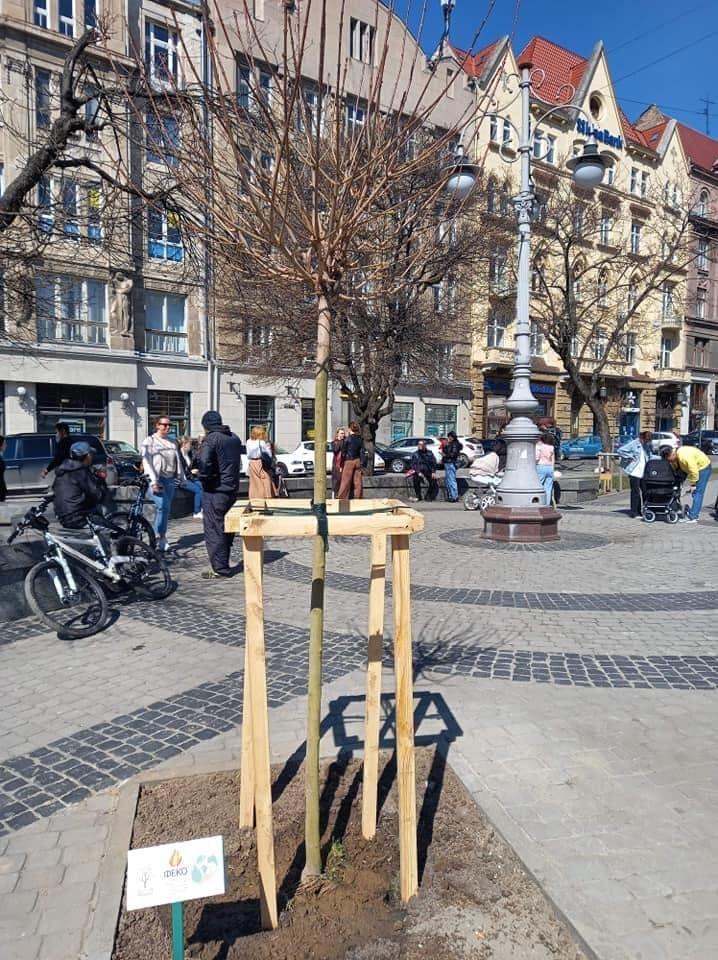 У Львові висадили 73 дерева, Фото: Facebook/Олександра Сладкова