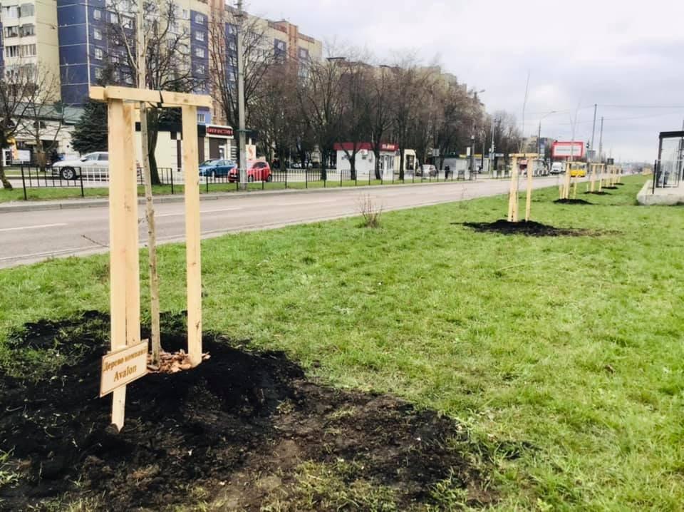 Висадка тополь у Львові