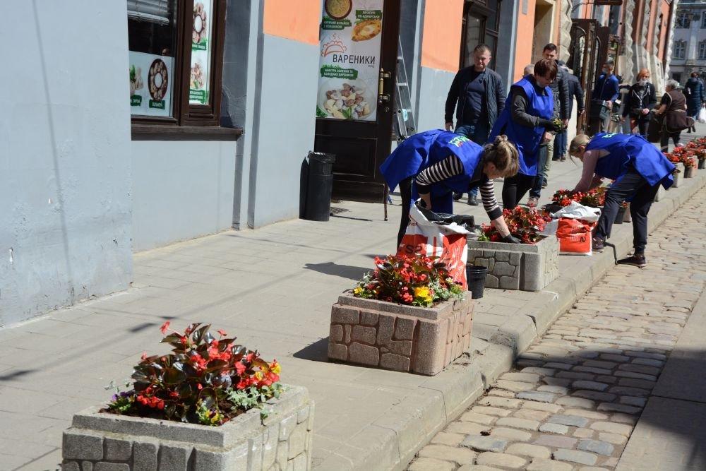 Висадка квітів у Львові, Фото - ЛМР
