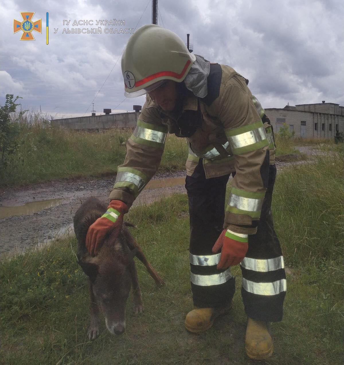 Як надзвичайники рятували собаку, Фото: ДСНС