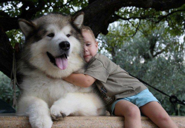 аляскинский маламут з дитиною