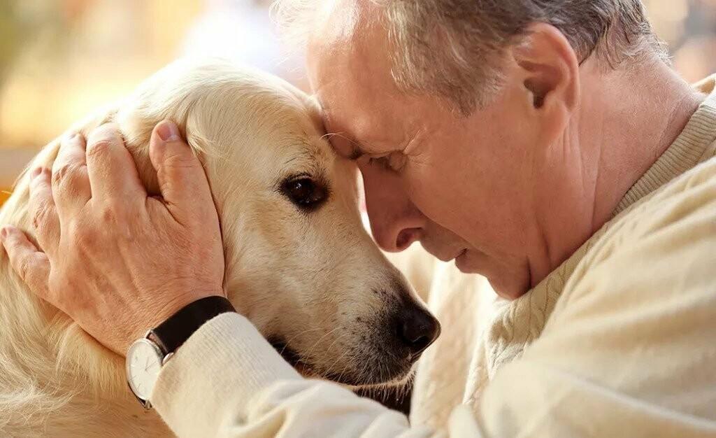 користь собак для людей похилого віку